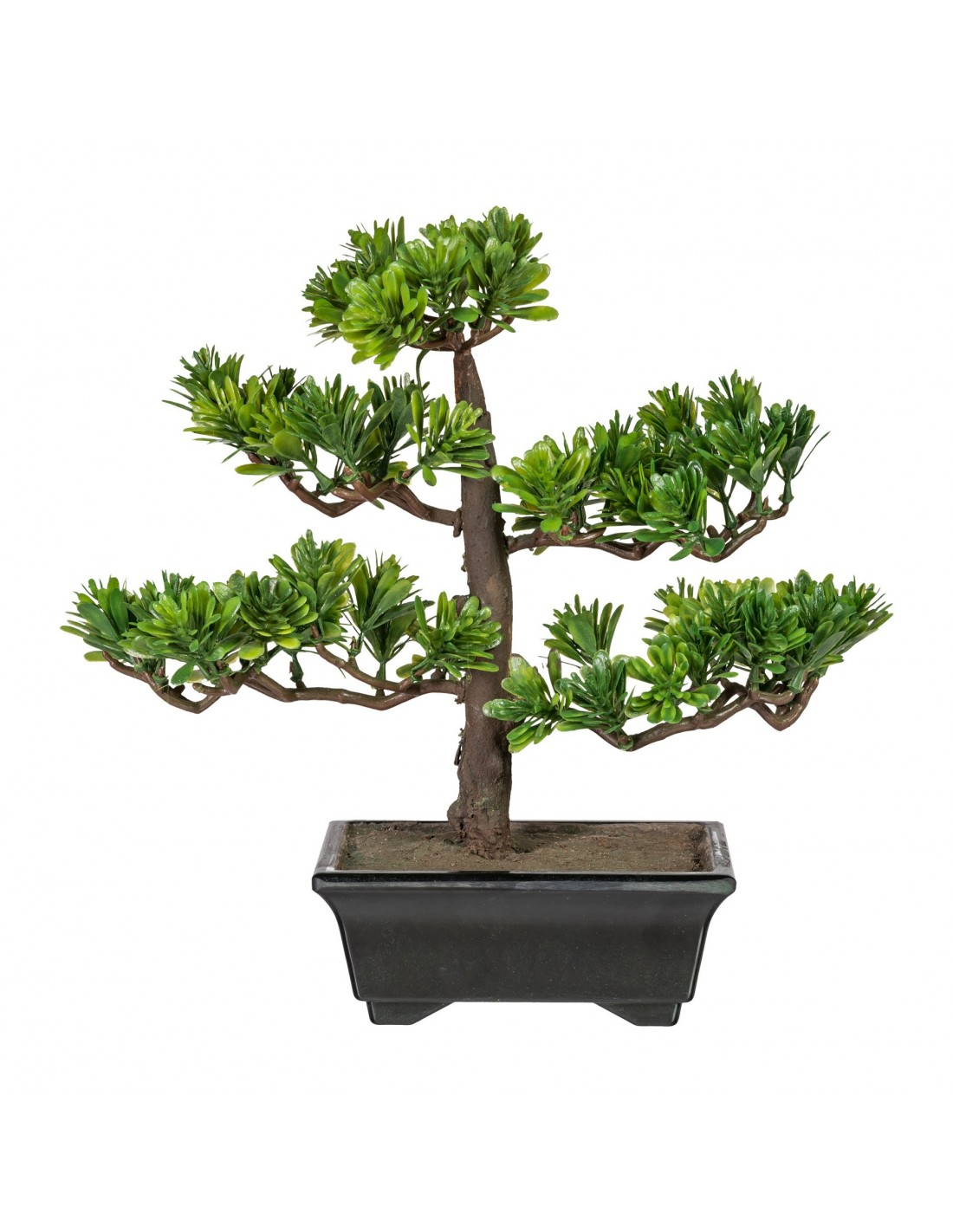 bonsai podocarpus ca 28cm gr n. Black Bedroom Furniture Sets. Home Design Ideas